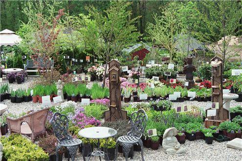PhotoGallery Garden Sales Manchester CT Specializing in Hostas