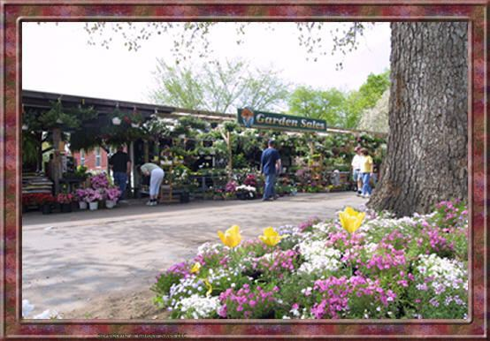 Garden Sales Manchester Ct Specializing In Hostas Hard To Find Perennials Shrubs Trees Roses Daylilies And Peonies